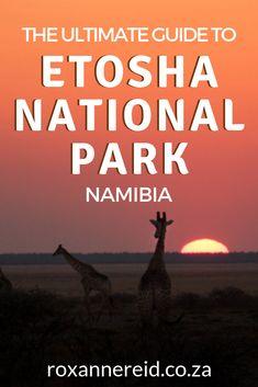Planning an Etosha safari? Find out everything you need to know about an Etosha National Park safari in this ultimate guide. It includes: Etosha Pan, Etosha accommodation, Etosha National Park camping, best time to visit Etosha, getting to Etosha, Etosha wildlife, is Namibia safe, things to do in Etosha on your Namibian Holidays and Namibia safari. Lots of tips for visiting Etosha National Park too.  #Etoshapark