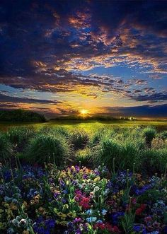 """*~ <3 ~* """"Out beyond ideas of wrongdoing and rightdoing, there is a field... I'll meet you there! When the soul lies down in that grass, the world is too full to talk about. Ideas, language, even the phrase each other doesn't make any sense."""" ~ Rumi"""