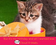 Someone get this #cute #Cloud9 #cat some treats ASAP.