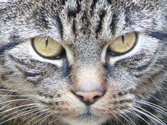 Ik ben geen poes... ik ben een kat.