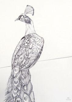 peacock__pen_drawing__by_hms_08-d3bzpqo.png (900×1263)