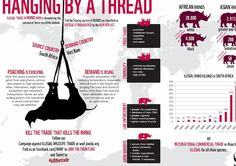 Rhino conservation infographic - 339 rhinos have been killed already this year.