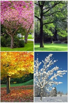 Four seasons. Spring, summer, autumn and winter image collage , Seasons Lessons, Four Seasons Art, Seasons Of The Year, Tree Collage, Image Collage, Collage Landscape, Sketch Manga, Winter Images, Free Art Prints