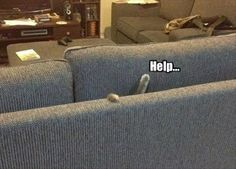 Pls Halp, I'm Stuck In The Couch funny animals ca 77434921 t animal lol humor funny pictures funny cats funny photos funny images funny animal pictures hilarious pictures Animal Captions, Funny Animal Memes, Funny Animal Pictures, Funny Animals, Cute Animals, Funny Humor, Funny Ads, Funny Stuff, Nerd Humor