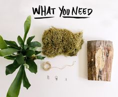 Garden DIY: Mounting a Staghorn Fern