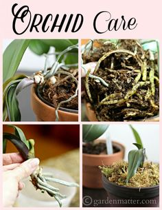 Orchid Care ~ how to repot an orchid