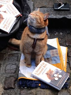 """nubbsgalore: """" after an apparent attack by a fox, a street cat named bob was found injured and curled up in the hallway outside of a support housing flat in tottenham were james bowen, a recovering..."""
