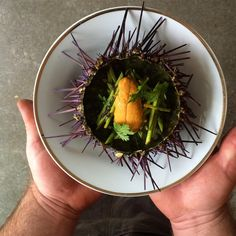 """You searchin' for some urchin? Look no further  