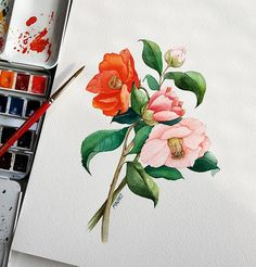watercolor illustration Camellia 스트레스 푸는 노하우 있으신가요 . Fabriano cold pressed Schmincke Horadam Babara 30R . . . . . ※저작권을 보호해 주세요 copy※ . . . #동백 #camellia #크리스마스 #arte_of_nature #flowery #꽃 #watercolours #greenlover #수채화 #illustrator #artpainting #instaart