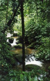 Amazon Rain Forest, Peru
