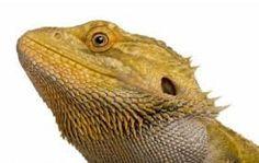 Afbeeldingsresultaat voor exotische reptielen