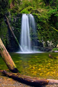 Marriners Falls in Otways National Park, Great Ocean Road, Victoria, Australia By -yury- Outback Australia, Australia Travel, Beautiful Waterfalls, Beautiful Landscapes, Beautiful Places To Visit, Places To See, Landscape Photography, Nature Photography, Australian Continent