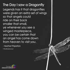 The dragonfly totem carries the wisdom of transformation and adaptability in life. Dragonflies Carry Significant Meaning: Do you see them often? Dragonfly Symbolism, Dragonfly Quotes, Dragonfly Images, Dragonfly Tattoo Design, Dragonfly Art, Dragonfly Painting, Tattoo Designs, Words Quotes, Life Quotes