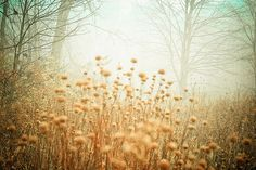 dreamy, pastel, wall art, fine art photography, nature, feminine, cottage chic, autumn, landscape, fog