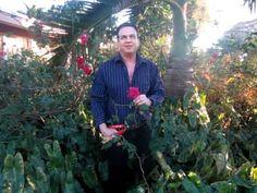 Robert Bornstein explains heirloom roses basics