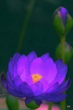 lovely enhanced colours
