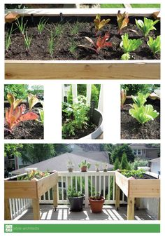 How to Create your own City Garden