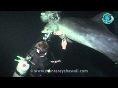 Dolphin Rescue Hawaii.mp4