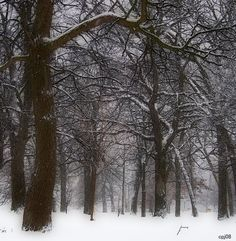 Lincoln Park Winter ~ Kenosha, WI
