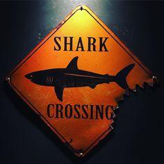 #shark zone in Rio