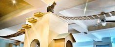Edimburgo: il primo Gatto Caffè. Casa Moggy. Un'esperienza unica in una caffetteria dove i clienti possono rilassarsi in compagnia dei gatti 12 felini presenti.