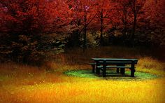 Table at the edge of the meadow in the fall.