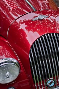 Red Hot. cars. http://www.annabelchaffer.com/categories/Gentlemen/