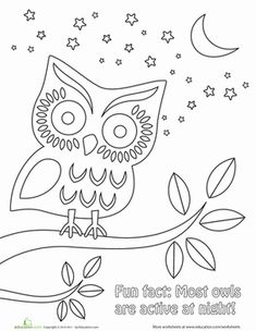 Nighttime Owl Coloring Page PagesKids