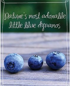 Blueberries - Recipes and Growing Tips | US Blueberry Council | Little Blue Dynamos