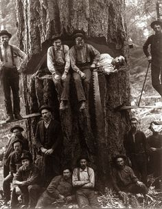wood-is-good:  Lumberjacks taken around 1901…