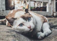 Funny animal memes make me laugh - cat memes - Funny animal memes - Cats Cute Kittens, Cats And Kittens, Kitty Cats, Funny Animal Memes, Funny Cats, Funny Animals, Cute Animals, Cat Memes, Animals Images