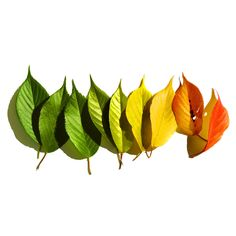 Turning leaves - wall decal - cool and beautiful!