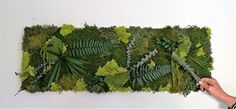 Flower Decorations, Herbs, Boutique Etsy, Amazon Fr, Nature, Flowers, Design, Art, Wall Of Frames