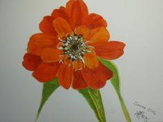 Zinnia Watercolour by AFMORRIS