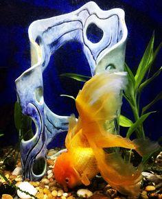 And now it looks like this!   #betta #natureart #etsy #etsyshop #charity #oranda  #orandagoldfish #goldfish #freshwater #aquacape #art #glazes #installationart#maker #craft #fishcave #weirdartwork #green #natur #communitytank  #pottery #sculpture #contemporaryceramics #clayart #aquariumdecor by fishluv9