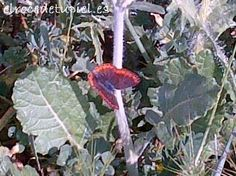 tras el vuelo de las mariposas