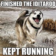funny iditarod quotes - Bing images