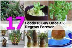 Foods you can regrow...