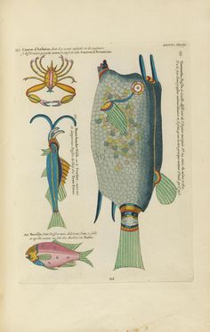 Poissons, ecrevisses et crabes, de diverses couleurs et figures extraordinaires, - Biodiversity Heritage Library