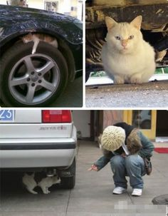 As the weather gets colder, be aware of outdoor cats that may sit under your car for warmth.