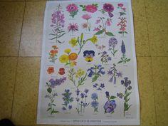 """Plakat """"Spiselige Blomster"""" Plakater og bøger kan bestilles pr. mail: post@nielsenognielsen.net eller pr. telefon: 38197698 / 24477698."""