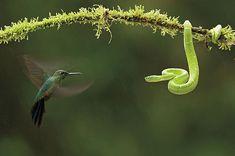 Heart Warming Award-Winning Nature Photography