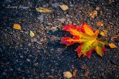 Autumn. Pskov. Russia.