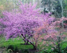 Meridian Hill Park -- Washington, DC -- Spring 2012