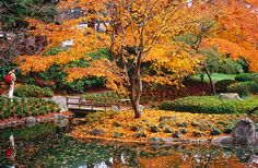 Nitobe Garden, University of British Columbia.
