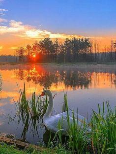 Beautiful Sunrise, Beautiful Birds, Beautiful World, Beautiful Places, Beautiful Pictures, Foto Picture, Landscape Photography, Nature Photography, Nature Story