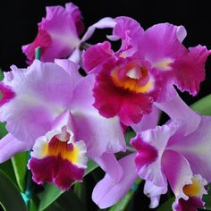 Hawaii Akatsuka Orchid Gardens. If you are on the Big Island, make the trip to this incredible place.