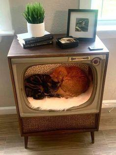 Deco Originale, Cat Room, Pet Furniture, Cat Crafts, My New Room, Cool Cats, Decoration, Sweet Home, Cute Animals