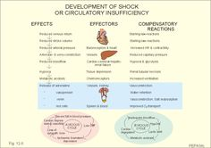 Development of shock or circulatory insufficiency.