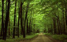 floresta-no-parque-nacional-na-pennsylvania1